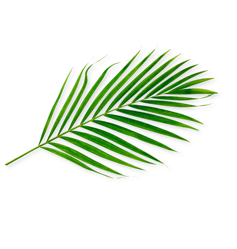 Natural palm leaf
